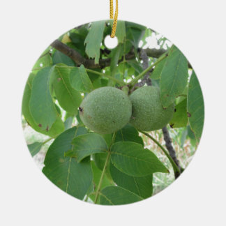 Green walnuts hanging on the tree . Tuscany, Italy Round Ceramic Ornament