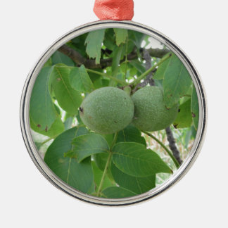 Green walnuts hanging on the tree . Tuscany, Italy Silver-Colored Round Ornament