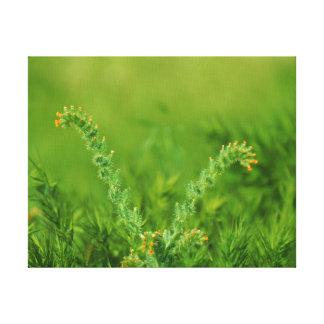 Green Wild Plant Canvas Print