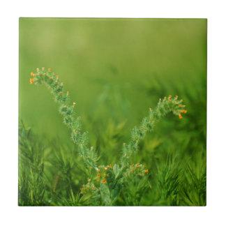 Green Wild Plant Tiles