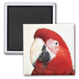 Green Wing Macaw Prinnie Parrot Magnet