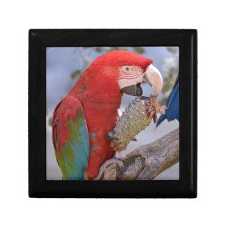 Green-winged macaw eating pine cone keepsake boxes