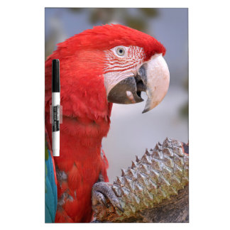 Green-winged macaw with pine cone dry erase board