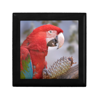 Green-winged macaw with pine cone jewelry boxes