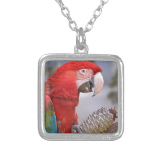 Green-winged macaw with pine cone silver plated necklace