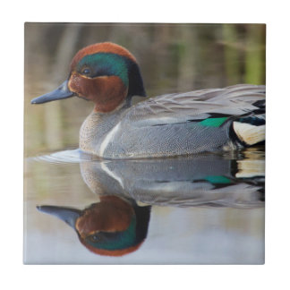 Green-winged Teal Ceramic Tiles