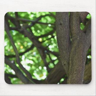Green Wisteria Pergola Tree Nature Photography Mouse Pad