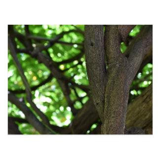 Green Wisteria Pergola Tree Nature Photography Postcard