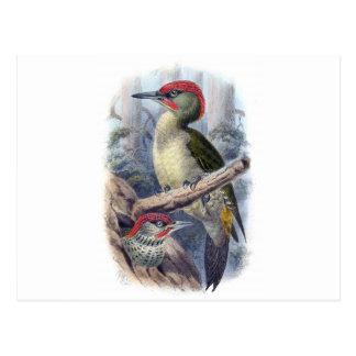 Green Woodpecker Postcard