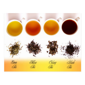Green, Yellow, Oolong, and Black Tea Postcard