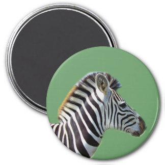Green Zebra Magnet