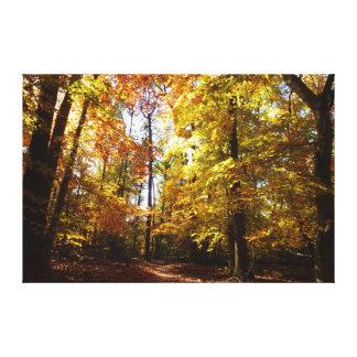 Greenbelt Park in Fall II Maryland Nature Scene Canvas Print