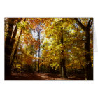 Greenbelt Park in Fall II Maryland Nature Scene Card
