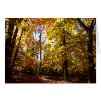 Greenbelt Park in Fall II Maryland Nature Scene Card