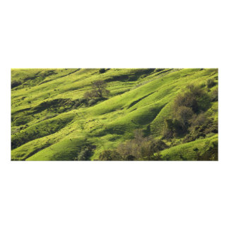 Greener Pastures in Big Sur CA Rack Card