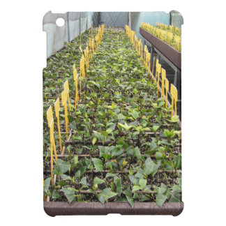 Greenhouse cultivation of Camellia japonica flower Cover For The iPad Mini