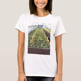 Greenhouse cultivation of Camellia japonica flower T-Shirt