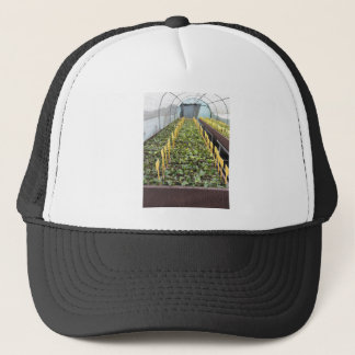 Greenhouse cultivation of Camellia japonica flower Trucker Hat