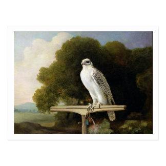 Greenland Falcon (Grey Falcon), 1780 (oil on panel Postcard