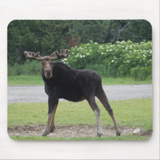 Greenville Moose 1 Mouse Pad