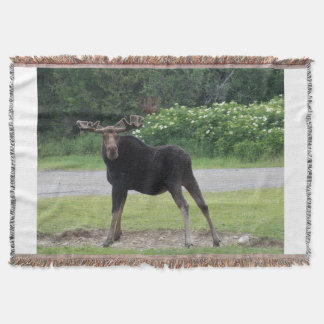 Greenville Moose 1 Throw Blanket