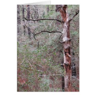 Greeting Card, blank Inside, Bastrop Pine Forest Card