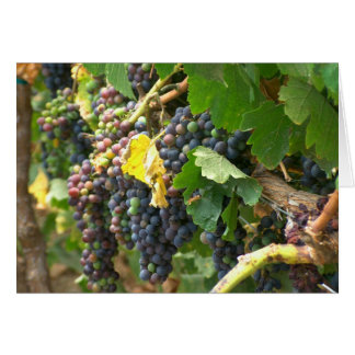 Greeting card, blank, with grapes card