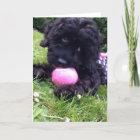 Greeting Card - Cockapoo Puppy