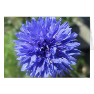 Greeting Card - Cornflower Blue Bachelor's Button