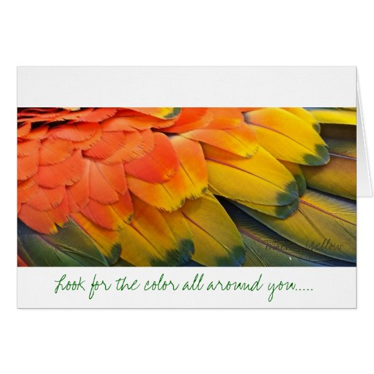 Greeting Card, Feather, Macaw Yellow Card