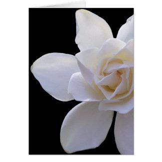 Greeting Card - Gardenia on Black