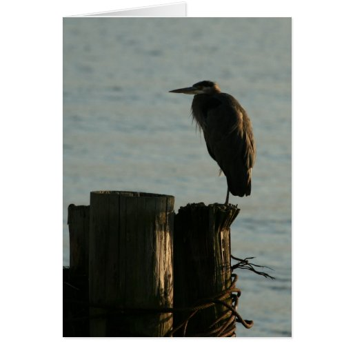 Greeting Card:  Great Blue Heron