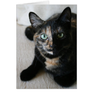 Greeting Card:  Mocha Cat Card