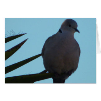 Greeting card Mourning dove