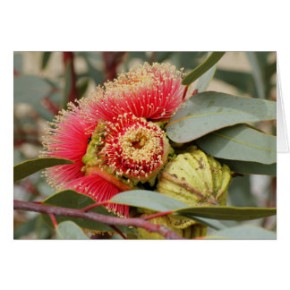 GREETING CARD - Native Australian Eucalyptus