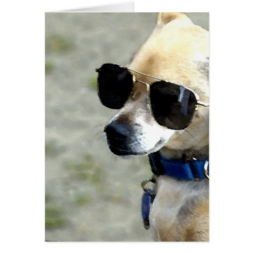 Greeting card of Small Dog Wearing Sunglasses