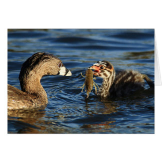Greeting Card - Pied-billed grebes with crayfish