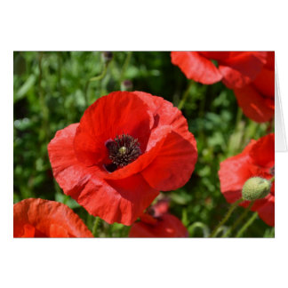 Greeting card - Red poppies