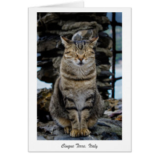 Greeting Card - Relaxed Cat in Cinque Terre, Italy