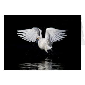 Greeting card - Snowy egret
