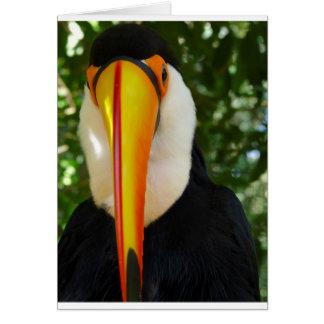 Greeting Card: Wildlife and Nature photos, toucan Card