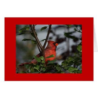 Greeting Card with Cardinal