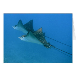Greeting Card with Ocean Eagle Rays Maui