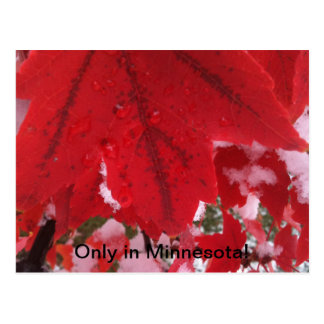 Greeting from Minnesota Postcard
