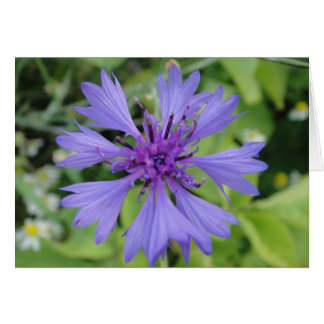 Greeting map blue cornflower, shapable in blank card
