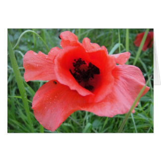 Greeting map poppy with water drops card