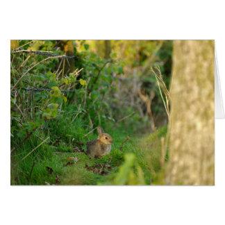 Greetings Card - Rabbit 2