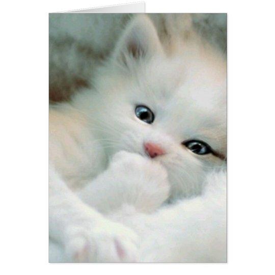 Greetings Card - White Fluffy Kitten