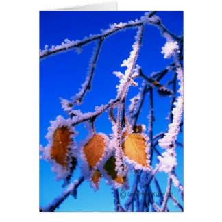 Greetings card with snowy leaves picture.