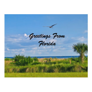 Greetings, Florida, Postcard